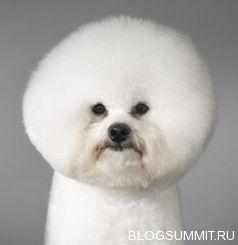 Самая дорогая собака в мире. Пятерка лучших пород
