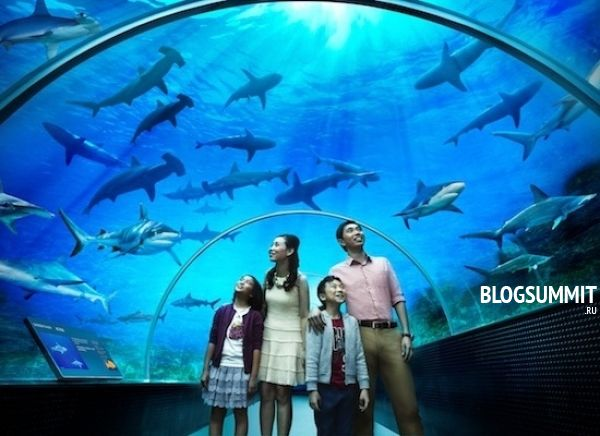 Самый большой аквариум в Японии - Окинава