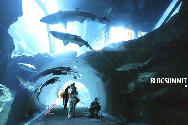 Самый большой аквариум в Америке