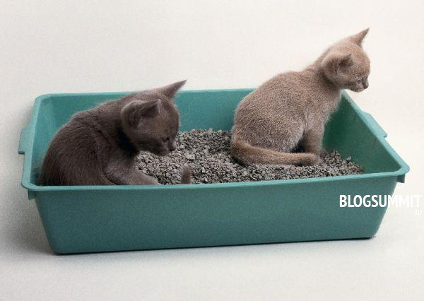 Котята способны научить друг друга ходить в лоток