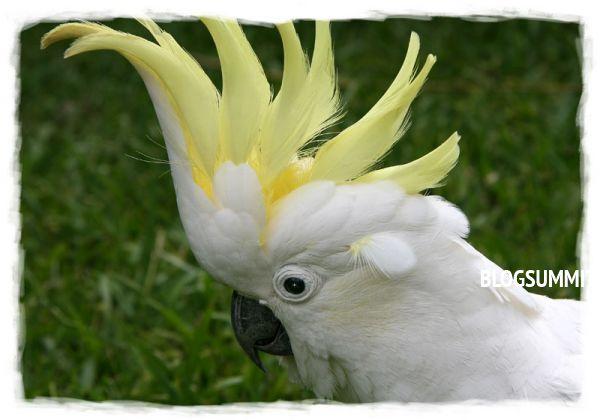 Говорящие попугай Какаду