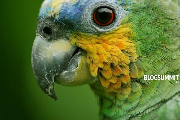 Амазонский вид попугаев