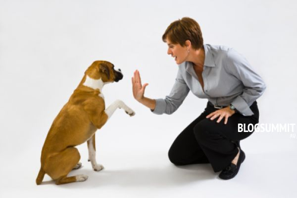 Собачью азбуку придется должным образом преподать