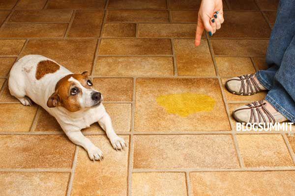 Необходимо мягко объяснять щенку, в чем он не прав