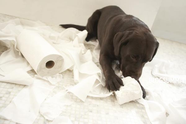 Нельзя наказывать щенка, какой бы проступок он не совершил