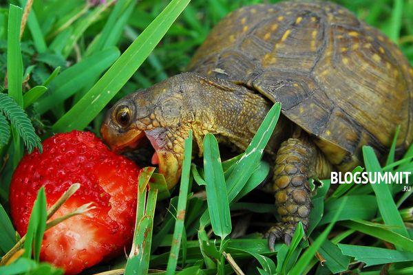 Черепашки с удовольствием едят фрукты
