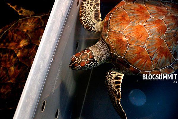 Террариум должен быть в три раза больше черепахи