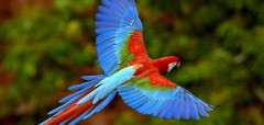 Говорящие попугаи - лучшие друзья