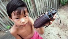 Жук дровосек. Опасный вредитель леса