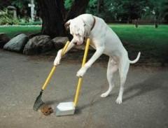 Как дрессировать собаку правильно