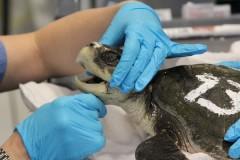 Как ухаживать за черепахами. Водяные и сухопутные питомцы