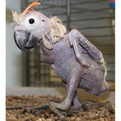 Распространенные болезни попугаев