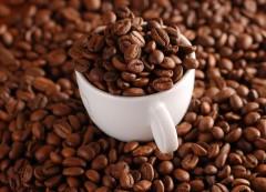 Самый дорогой кофе. Как растет кофе?