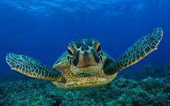 Водяные черепахи - уникальные животные